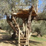tree house accomodations